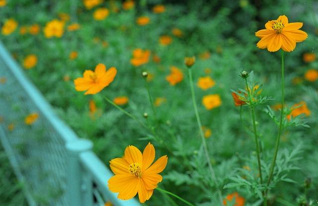 2012080201-5515-OM4T-Portra160-26.jpg